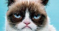 Social Petworking: Die berühmtesten Tiere im Netz