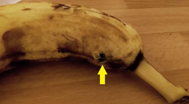 Horror-Fund in Banane!