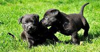 Mann adoptiert Hunde-Welpen - 2 Jahre später der große Schock!