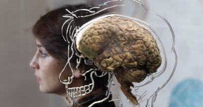 Tödlicher Parasit greift das Gehirn gezielt an!