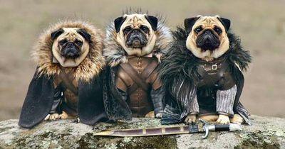 Die besten Game of Thrones Kostüme