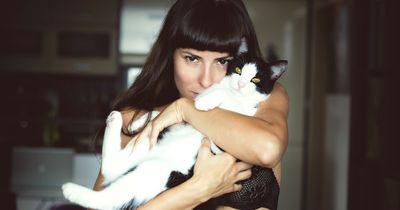 Warum wir ALLE Katzenvideos lieben