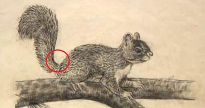 Hast du gedacht, dass das ein normales Bild eines Eichhörnchens ist? Dann zoom mal näher ran!