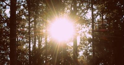 Das machen Sonnenstrahlen mit unserem Gehirn