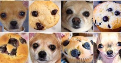 Toastbrot oder Hundehintern? Muffin oder Chihuahua?
