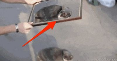 KRASS: Bei diesen 6 Videos kannst du deinen Augen nicht trauen!