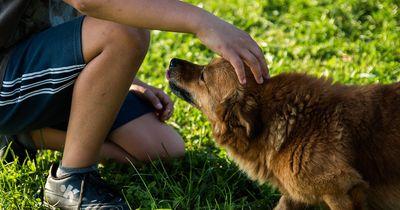 Dreijähriger schreibt Brief an seinen verstorbenen Hund
