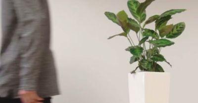 Kein Witz: Mit dieser Pflanze kannst du dein Handy aufladen
