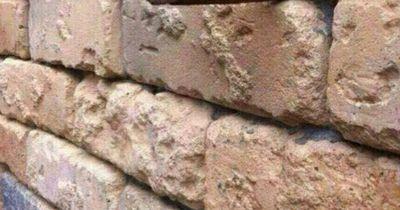 Was siehst du auf diesem Bild?