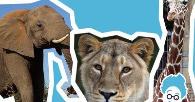 Welches Tier ist am stärksten?