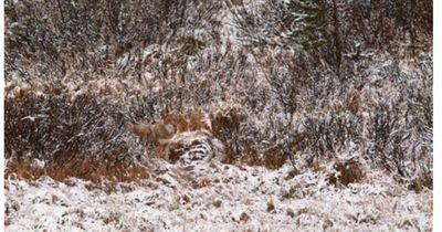Findest du die versteckten Tiere?