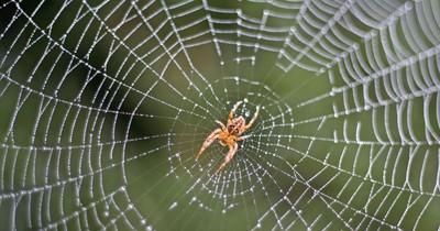 7 Mythen über Spinnen: Stimmt das überhaupt?