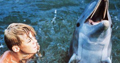 """""""Flipper"""": So sieht der kleine """"Sandy"""" heute aus!"""